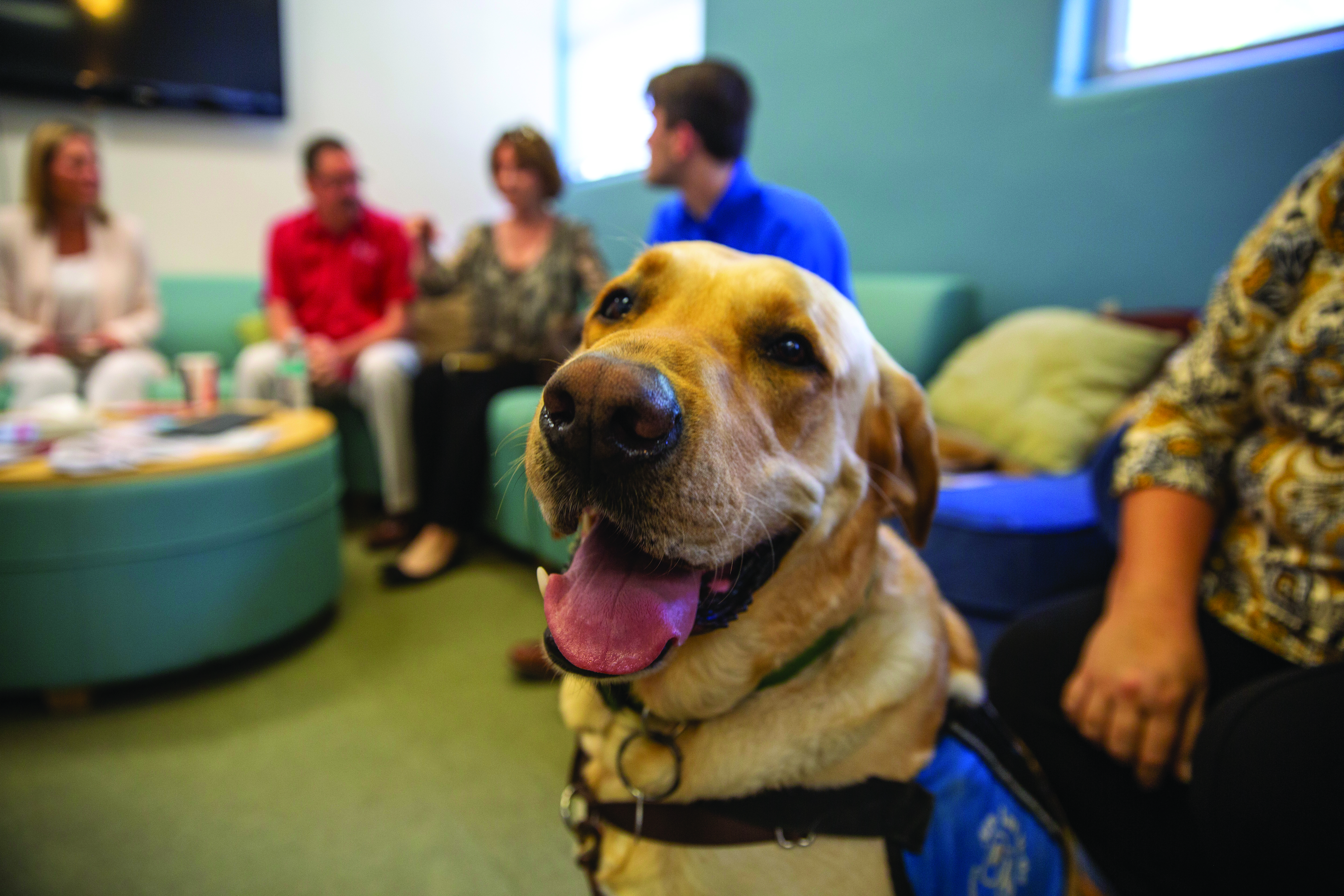 Veterans Affairs soon to welcome new therapy dog, Doc