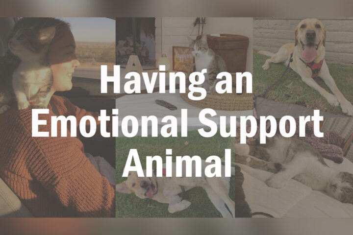 Having an emotional support animal